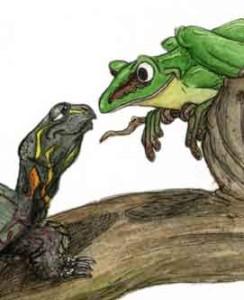 "From ""Frog's Winter Walk"" by Jessica Schaub"